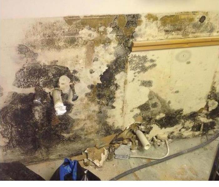 Mold Remediation Why Is Certification Important for Home Mold Remediation Companies?